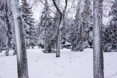 Парк зимы Крона переулка ( стоковые фото