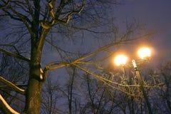 Парк зимы, освещение ночи, освещает светящ, снег на ветвях, волшебство зимы, wintergarden Стоковое Фото