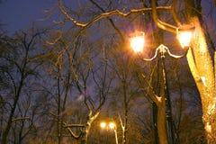 Парк зимы, освещение ночи, освещает светящ, снег на ветвях, волшебство зимы, wintergarden Стоковая Фотография