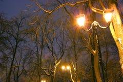 Парк зимы, освещение ночи, освещает светящ, снег на ветвях, волшебство зимы, wintergarden Стоковая Фотография RF