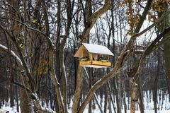 Парк зимы снега, деревянный фидер птицы, желтые большие птицы синиц, майор Parus, есть семя Стоковые Фотографии RF
