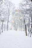 Парк зимы Стоковое Изображение