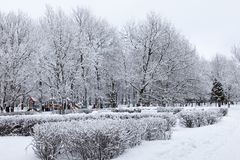 Парк зимы Snowy Стоковое Фото