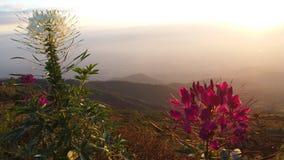 Парк имеет красивые хорошие цветки стоковое изображение rf