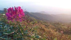 Парк имеет красивые хорошие цветки стоковые изображения rf