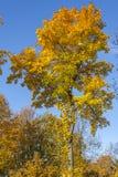 парк листва осени цветастый Стоковые Изображения RF
