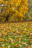 парк листва осени цветастый Стоковая Фотография