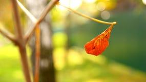 парк листва осени цветастый Стоковое Фото