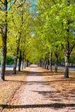 парк листва осени цветастый Стоковое Изображение