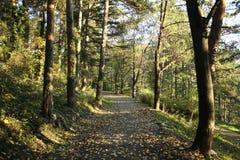 Парк листовой капусты Kitino Стоковые Изображения
