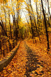 парк листьев осени стоковые изображения