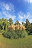 парк Италии красивейшего цветка кровати декоративного фантастично высокий северный reeds Стоковые Изображения