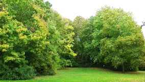 Парк и листья акции видеоматериалы
