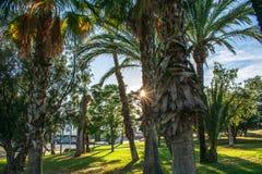 Парк и небо стоковые фотографии rf
