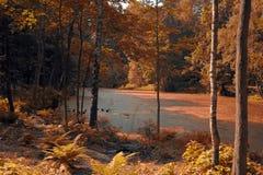 Парк и озеро осени Стоковое Фото