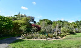 Парк и пальмы Стоковое Изображение