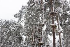Парк кабеля в лесе зимы coniferous леса, снег на деревьях и веревочки стоковая фотография rf