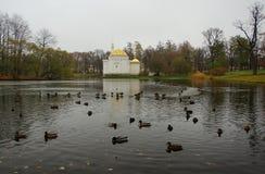 Парк Катрина в Tsarskoe Selo, утках, большом пруде и турецкой ванне Стоковое Изображение