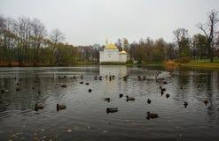 Парк Катрина в Tsarskoe Selo, утках, большом пруде и турецкой ванне Стоковые Фотографии RF