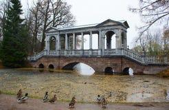 Парк Катрина в Tsarskoe Selo, утках и сибирском мосте Стоковые Фотографии RF