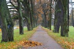 Парк Катрина в Tsarskoe Selo Стоковое Изображение