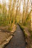 Парк Корнуолл Англия Великобритания страны Tehidy Стоковое фото RF