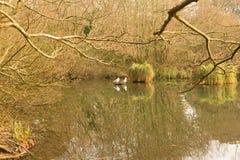 Парк Корнуолл Англия Великобритания страны Tehidy Стоковая Фотография RF
