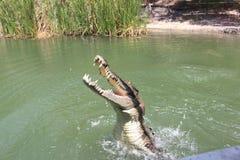 Парк крокодила стоковая фотография