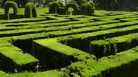парк лабиринта Стоковые Фото