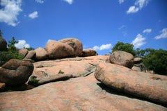 парк ландшафта слона трясет положение Стоковая Фотография RF