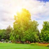 Парк лета с красивыми flowerbeds и солнцем стоковая фотография