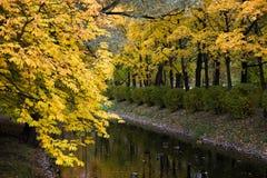 парк листва осени цветастый стоковые изображения
