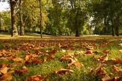 парк листва Стоковые Фото