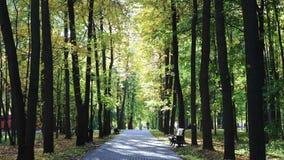 парк листьев падения осени сток-видео