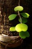 парк листьев сердца Стоковое Изображение RF