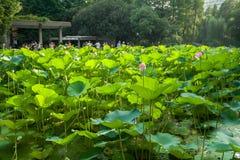 Парк людей в районе Huangpu Шанхая Китай стоковые изображения rf