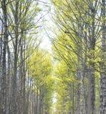 Парк на весне Стоковые Изображения