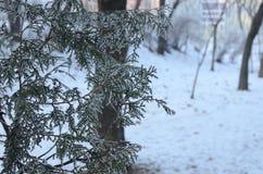 Парк на зимний день Стоковое Фото