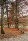 Парк на наклоне во время осени стоковые фотографии rf