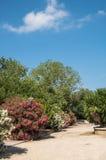 Парк на солнечный день Стоковые Изображения