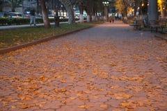 Парк ночи города в осени при пути посыпанные с упаденными листьями и деревьями желтого цвета Стоковая Фотография