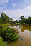 Парк озера внешний в Selangor Малайзии Стоковые Изображения RF