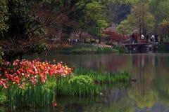 Парк озера Ханчжоу западный весной Стоковая Фотография RF