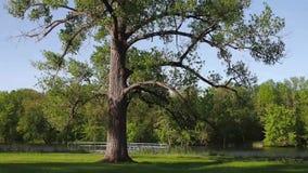 Парк озера Onondaga сток-видео