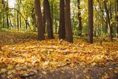 Парк осени, белка стоковые изображения rf