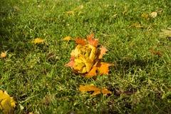 Парк осени, букет роз сделанных от упаденных кленовых листов, дальше Стоковая Фотография RF