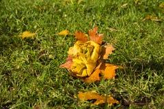 Парк осени, букет роз сделанных от упаденных кленовых листов, дальше Стоковое Изображение RF