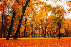 Парк осени в ландшафте осени ярких цветов пасмурном сиротливого парка с золотыми деревьями осени и упаденными апельсином листьями Стоковые Изображения RF
