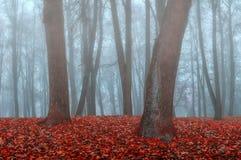 Парк осени в густом тумане - ландшафте осени с деревьями осени и упаденными апельсином листьями Стоковые Фотографии RF
