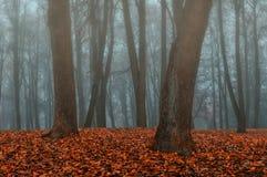 Парк осени в густом тумане - ландшафте осени с деревьями осени и упаденными апельсином листьями Стоковое Изображение RF